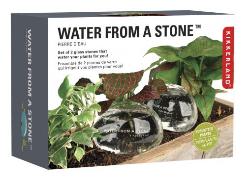 Water From A Stone Nunet Plant